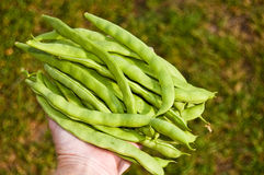 Pole beans Stock Images
