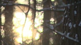 Pole, breadth, trip, coniferous, symbol, sign, index. Winter beauty of forms charms magic of the weather phenomenon stock video footage