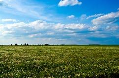 Pole dandelions Obrazy Stock