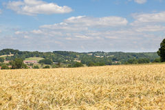 Pole dojrzenie banatka, Creuse, Limousin, Francja Fotografia Royalty Free