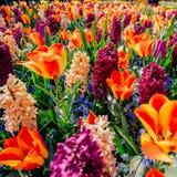 pole dzikie kwiaty niebieska spowodowana pola pełne się chmura dzień zielonych roślin krajobrazu ruchu pokaz mały nie niebo było  Zdjęcie Royalty Free