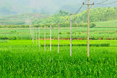 Pole  in  field Royalty Free Stock Image