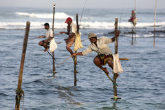 Pole fishermen at work in the early morning at Koggala on the south coast of Sri Lanka. Royalty Free Stock Photo