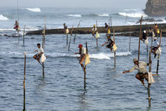 Pole fishermen at work in the early morning at Koggala on the south coast of Sri Lanka. Royalty Free Stock Photos