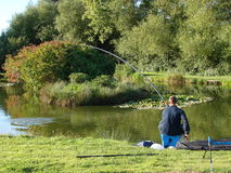 Pole fishing for carp. A fisherman using a pole.hooked into a carp Royalty Free Stock Photography