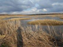 pole Free/Piękny natura krajobraz w wiosna czasie Rosja zdjęcia royalty free
