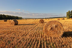 Pole haystacks -2 obraz stock