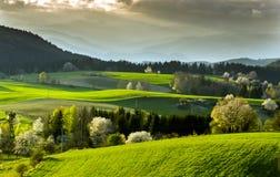 Pole i łąka obraz royalty free