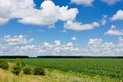 Pole i chmury zdjęcia royalty free