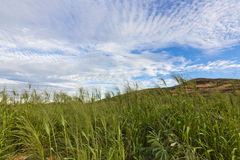 Pole i wzgórza z niebieskim niebem Zdjęcia Stock