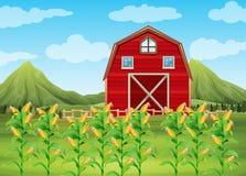 Pole kukurydzana i czerwona stajnia ilustracji