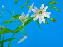 pole kwiatów Zdjęcia Stock