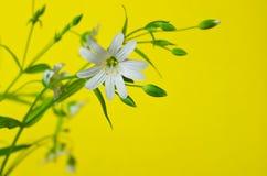 pole kwiatów Zdjęcie Royalty Free