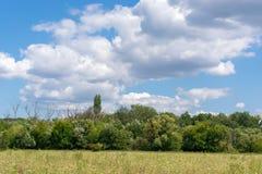 Pole kwiatów drzewa przeciw niebieskiemu niebu z chmurami zdjęcie royalty free