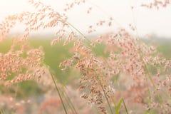 Pole kwiat Zdjęcie Royalty Free