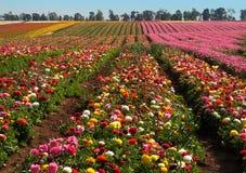 pole kwiat Zdjęcia Royalty Free