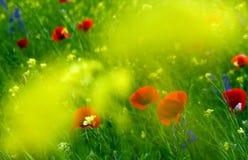 pole kwiat zdjęcie stock