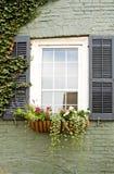pole kwiat okno Zdjęcie Stock