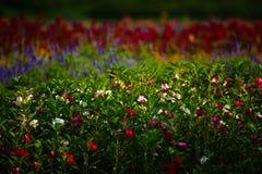 Pole kwiaty Zdjęcia Stock