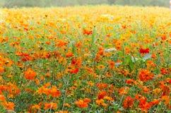 Pole kwiaty Obrazy Stock