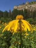 Pole kwiaty Zdjęcie Royalty Free