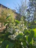 Pole kwiaty są delikatnymi kolorami naturalne piękno obraz stock