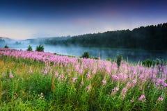 Pole kwitnie na tle mgłowy jezioro Pokój i zaciszność lato noc zdjęcia royalty free