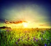 pole kwitnie purpury obrazy stock