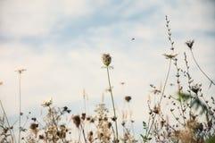 Pole kwitnie w jesieni Zdjęcia Royalty Free