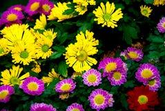 Pole kwitnie w polu Zdjęcia Royalty Free