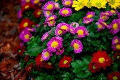 Pole kwitnie w polu Zdjęcie Stock