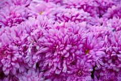 Pole kwitnie w polu Zdjęcie Royalty Free