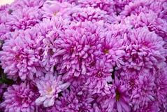 Pole kwitnie w polu Obrazy Royalty Free