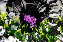 Pole kwitnie w polu Obraz Stock