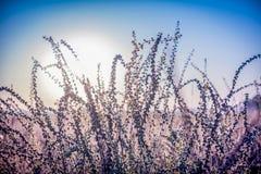 Pole kwitnie w promieniach wschód słońca Obraz Stock