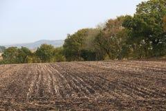 Pole, lasów wizerunki Obraz Royalty Free