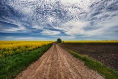 pole malowniczy rapeseed pole Droga blisko pola zachmurzone niebo Obrazy Royalty Free