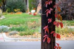 Pole med röda sidor Royaltyfri Fotografi