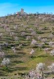 Pole Migdałowi drzewa zdjęcia royalty free