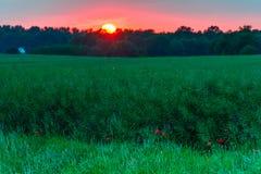 pole na gwałt słońca Obraz Royalty Free