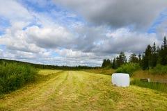 Pole na krawędzi lasu Fotografia Royalty Free