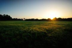 pole na wschód słońca Fotografia Royalty Free