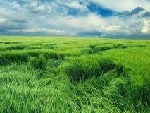 pole niekończący się zieleń Obraz Royalty Free