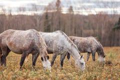 pole pasa zielonego stada koni lato Obraz Stock