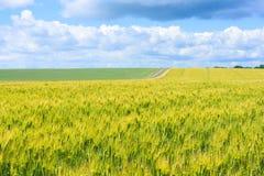 Pole potomstwo zielona banatka i wiejska droga, wiejski krajobraz z niebieskim niebem z chmurami Fotografia Stock