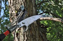 Pole Pruner Saw Stock Image
