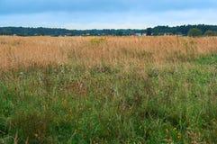 Pole, równina, rozległość, las, horyzont, suchy, trawa, niebo, chmurnieje Fotografia Royalty Free
