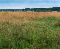 Pole, równina, rozległość, las, horyzont, suchy, trawa, niebo, chmurnieje Fotografia Stock
