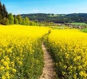 Pole rapeseed, canola lub colza z ścieżka sposobem, Obraz Royalty Free