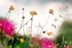 Pole rośliny Obrazy Royalty Free